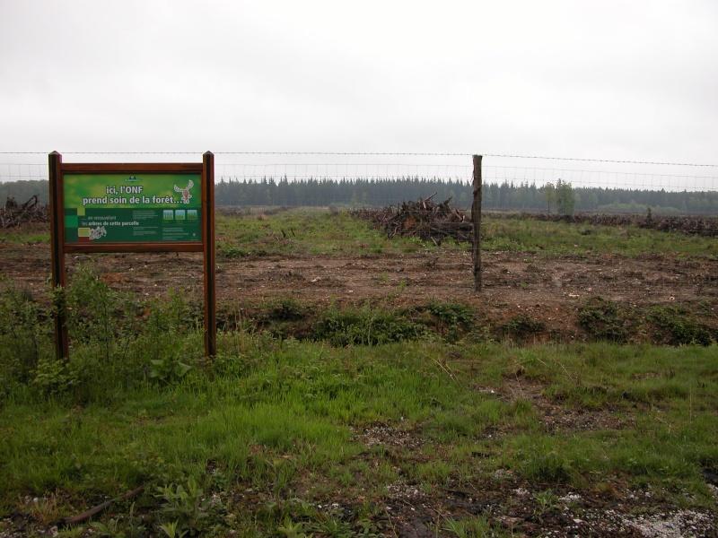 La forêt est sauvée !! Dscn1511