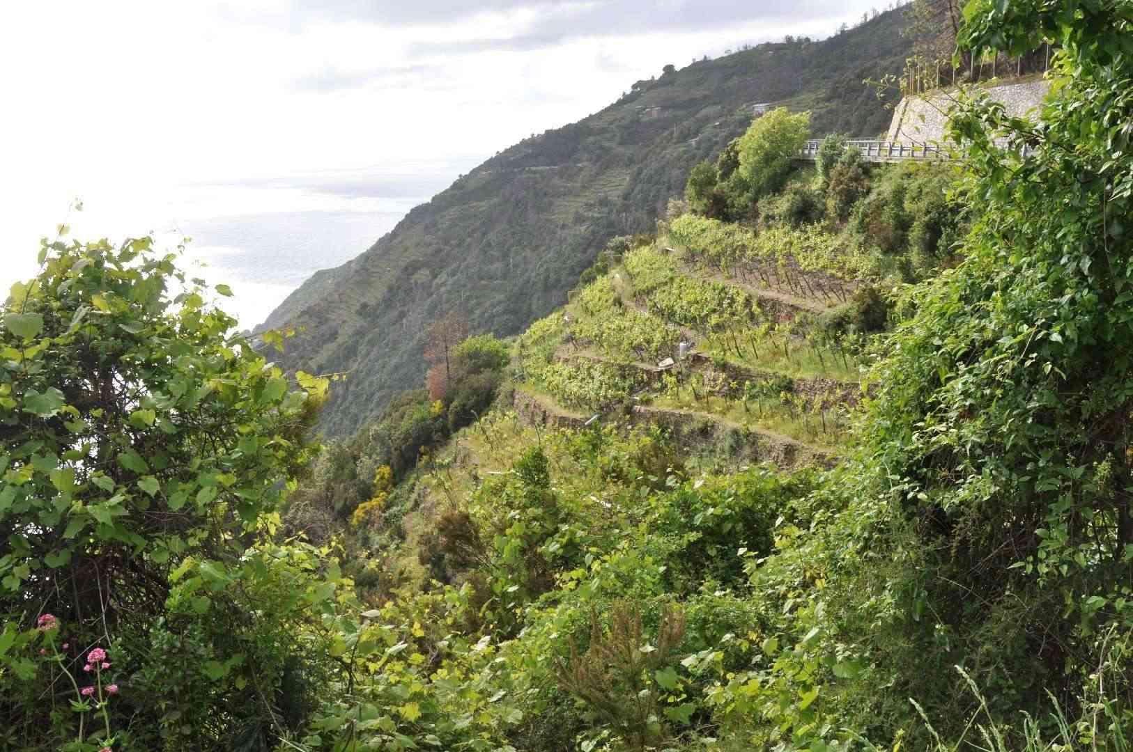 Parc naturel régional de Portovenere, Cinque Terre - Italie Dsc_2517