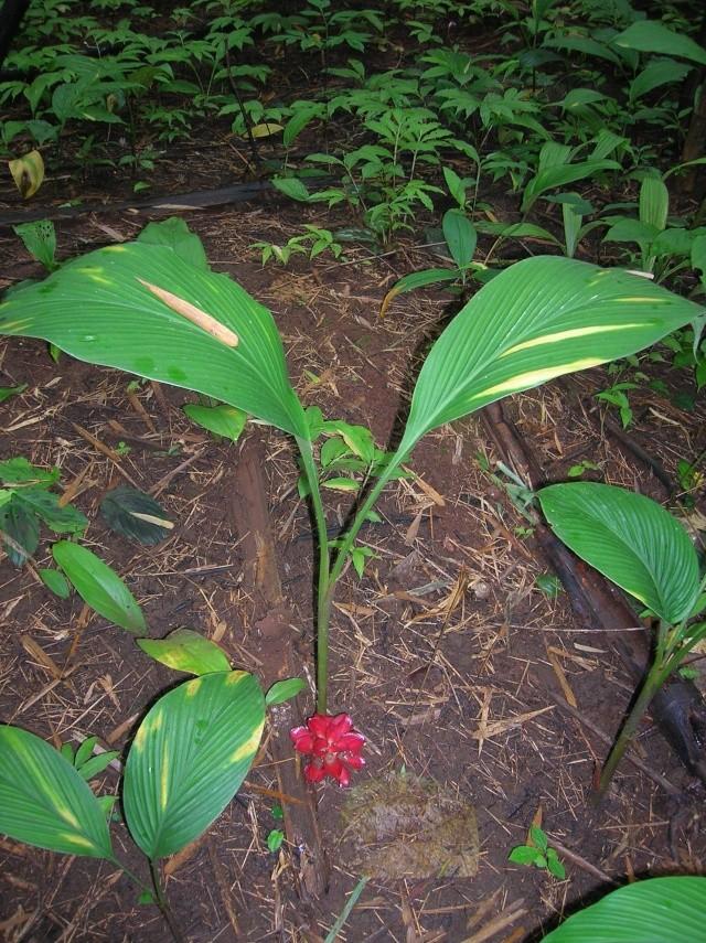 plantes à déterminer Dscn3111