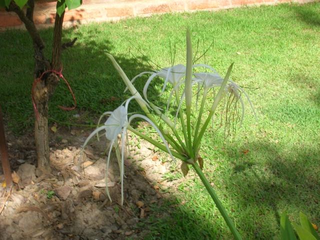 plantes à déterminer Dscn3313