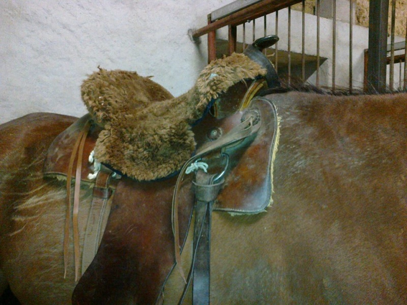 taille selle western... (je n'y connais rien!!!!:S) 910