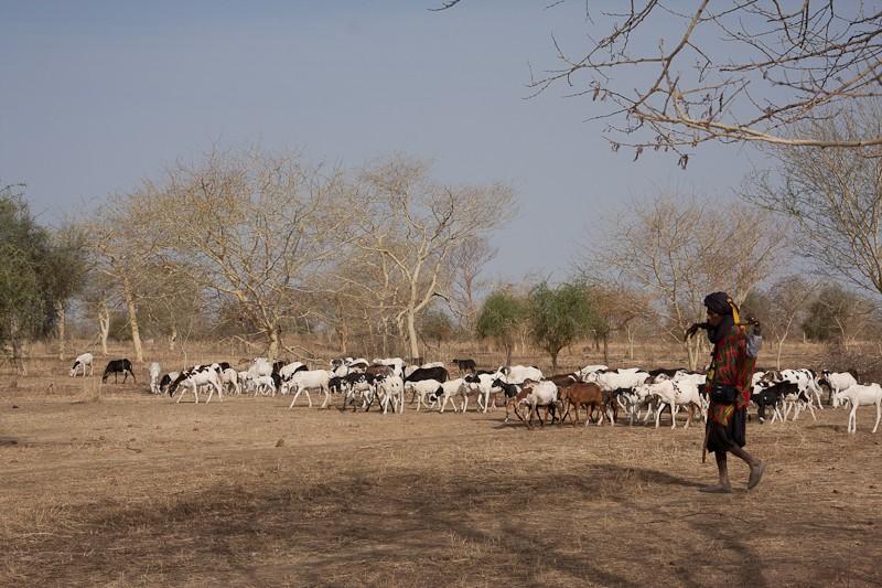 14- de Kayes (Mali) à Sélibabi (Mauritanie) par la piste Kayes_11