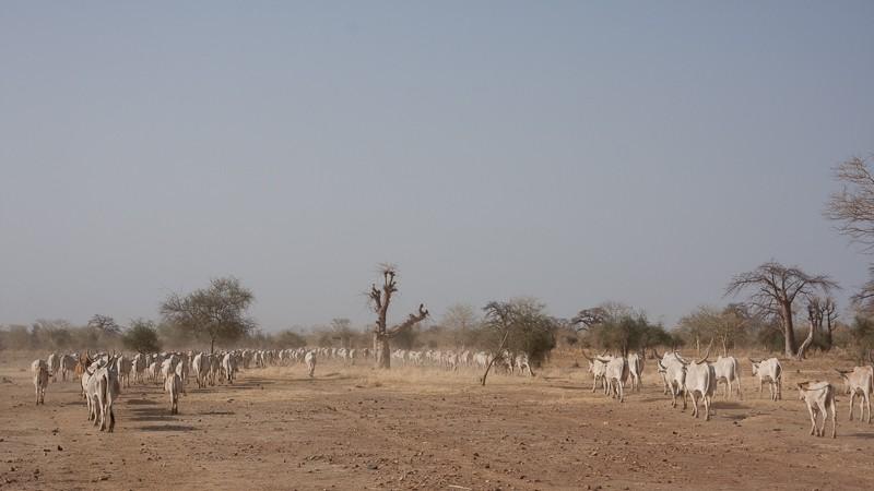 14- de Kayes (Mali) à Sélibabi (Mauritanie) par la piste Kayes_12