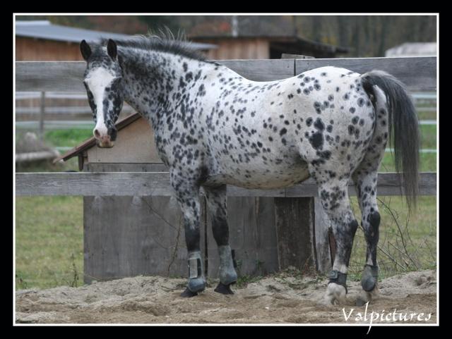 Mes photos de chevaux... - Page 3 Fow1110