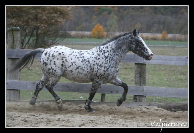 Mes photos de chevaux... - Page 3 Fow710
