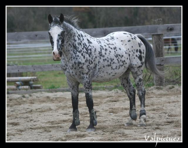 Mes photos de chevaux... - Page 3 Fow810