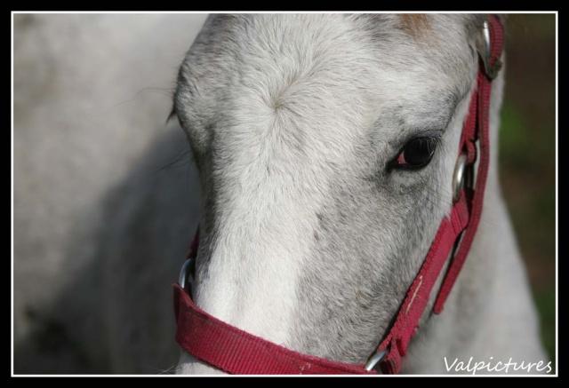 Mes photos de chevaux... - Page 3 St1010