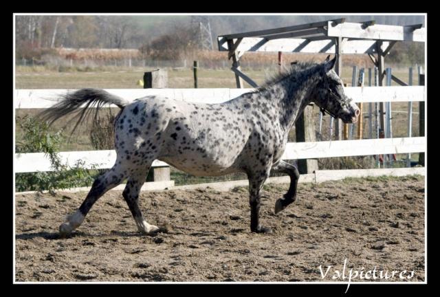 Mes photos de chevaux... - Page 3 St1013