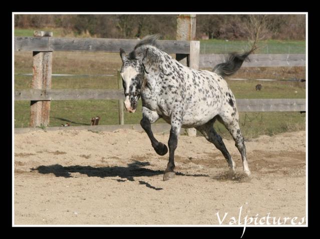 Mes photos de chevaux... - Page 3 St212