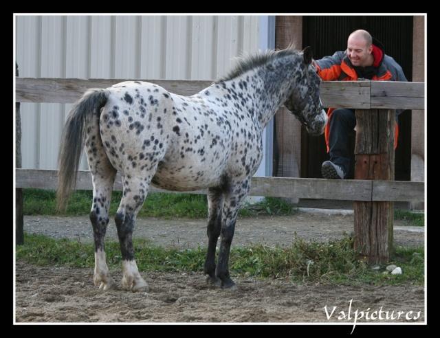 Mes photos de chevaux... - Page 3 St912