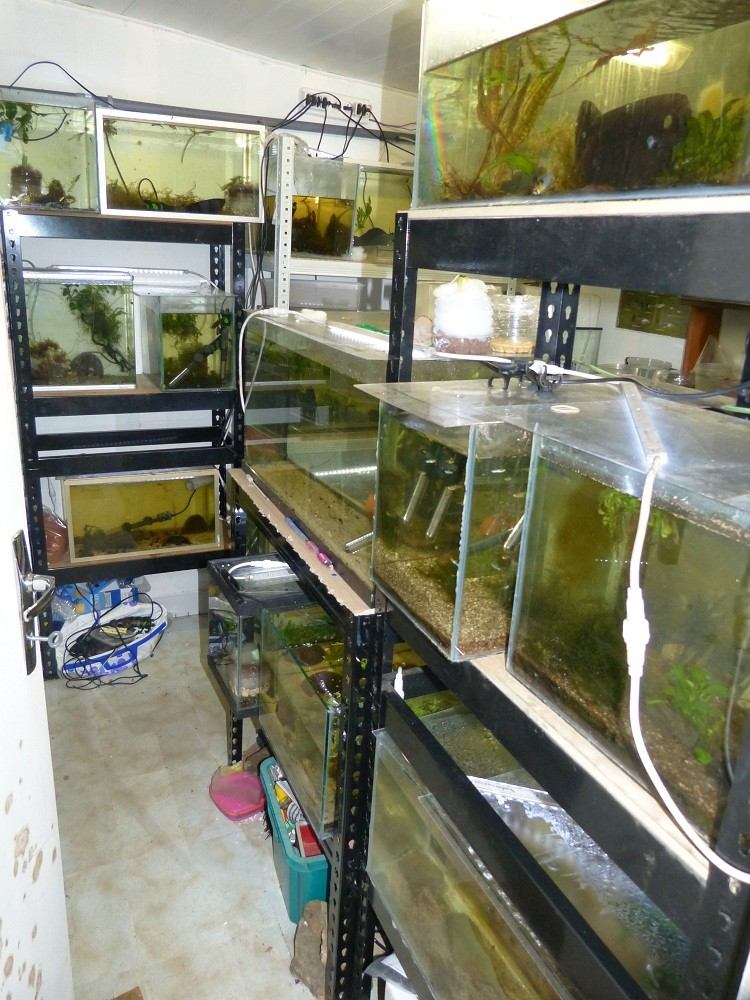 ma fishroom P1030010