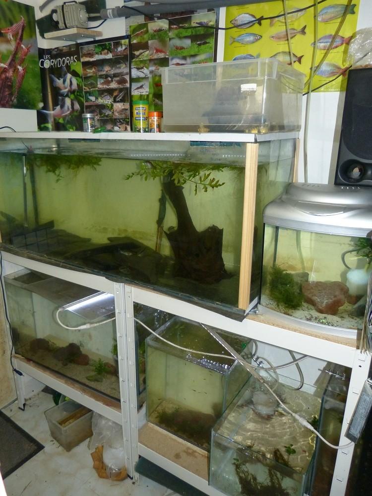 ma fishroom P1030011