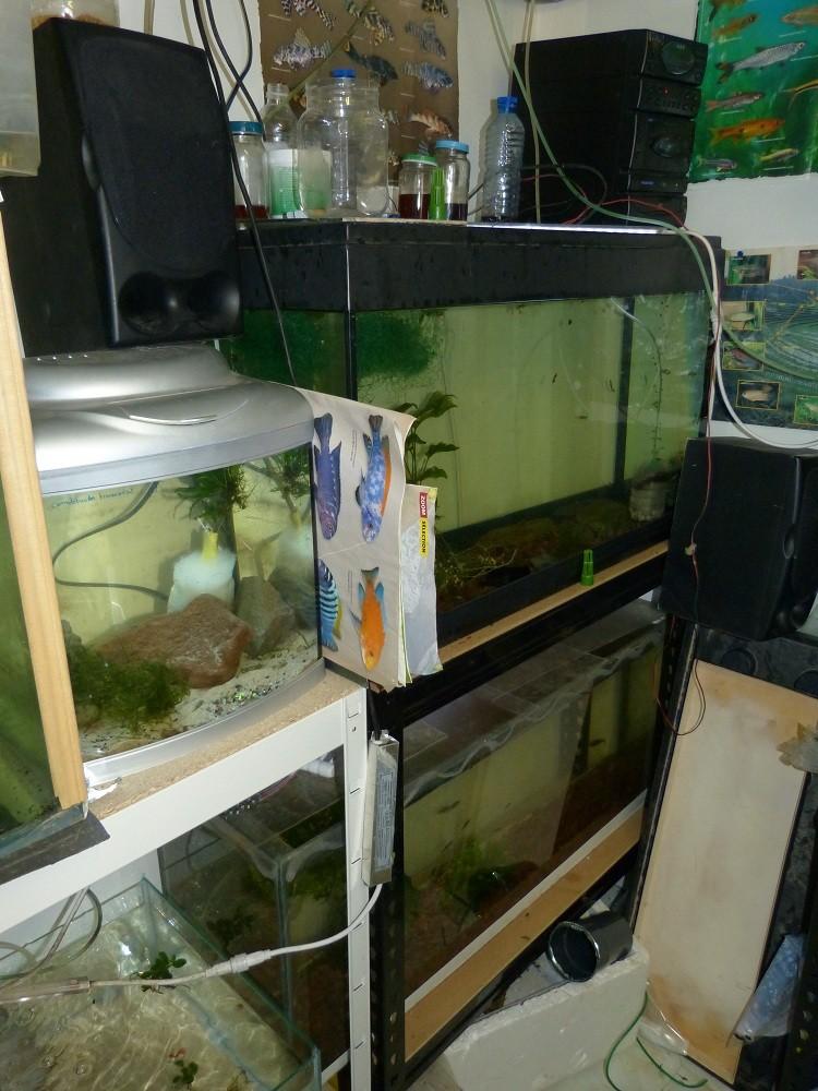 ma fishroom P1030012