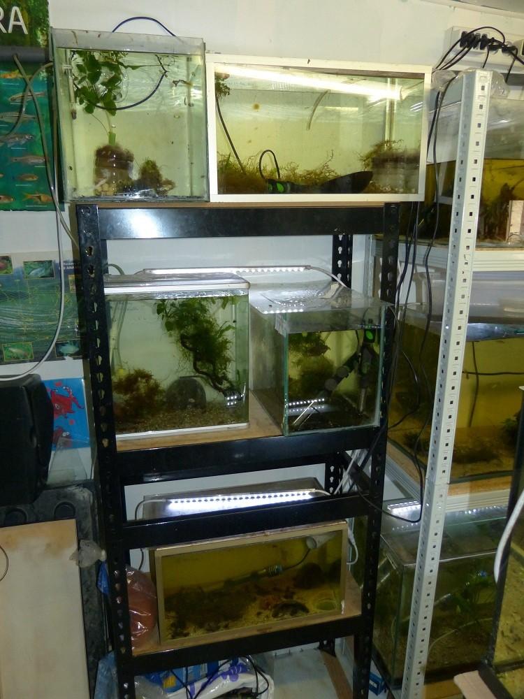 ma fishroom P1030013
