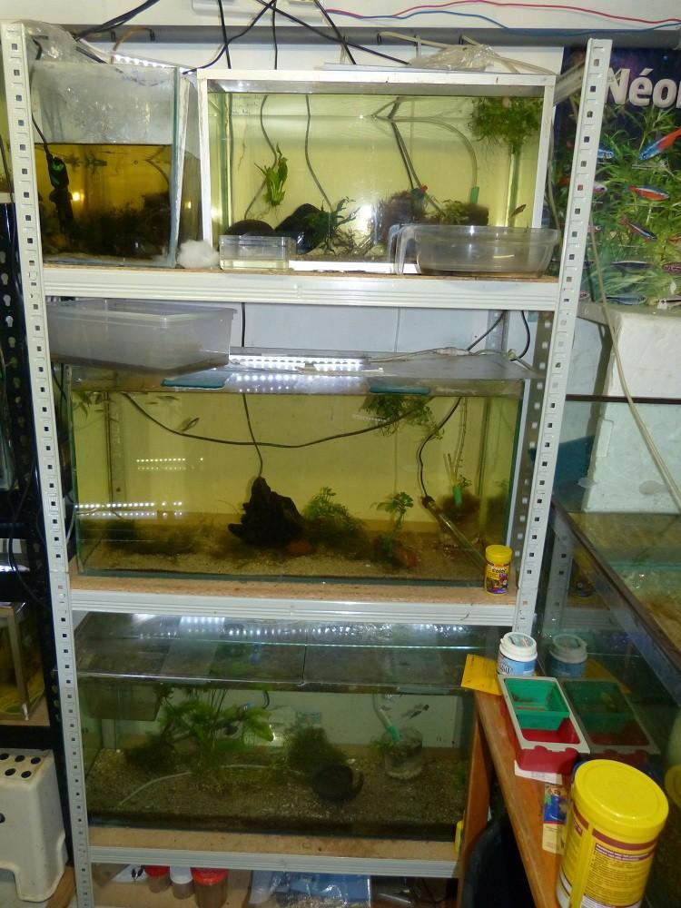 ma fishroom P1030014