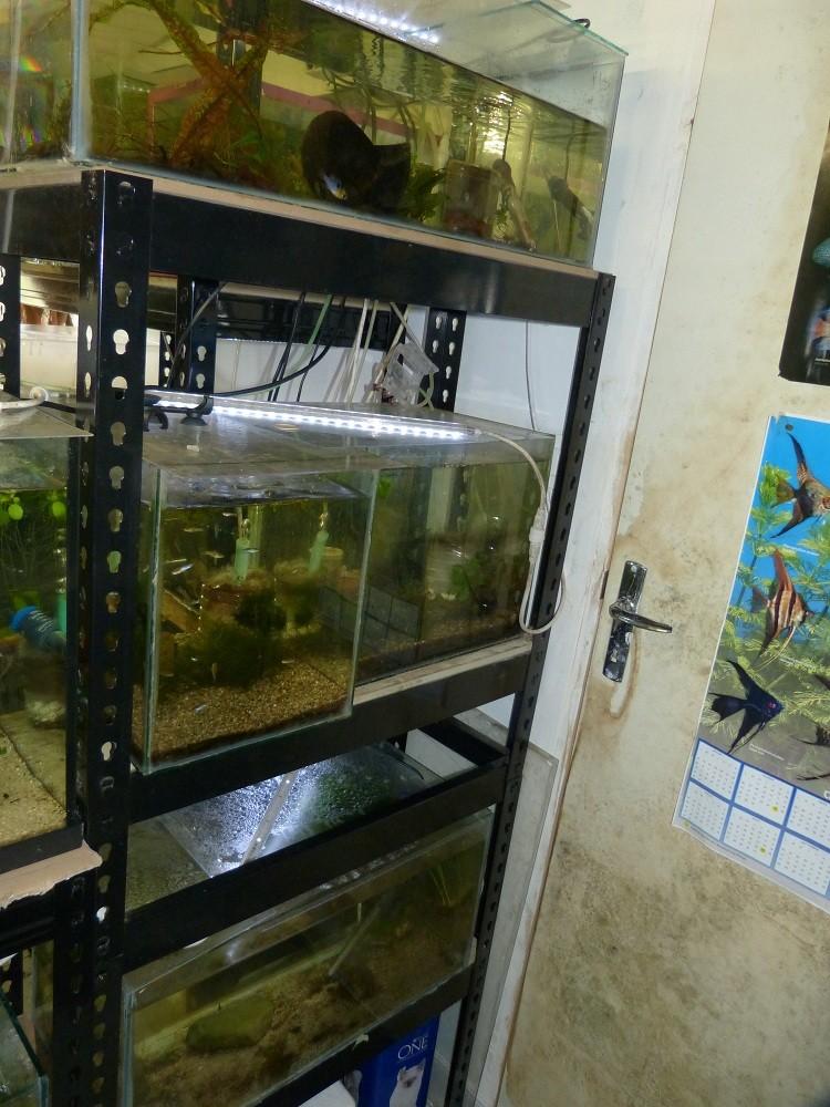 ma fishroom P1030015