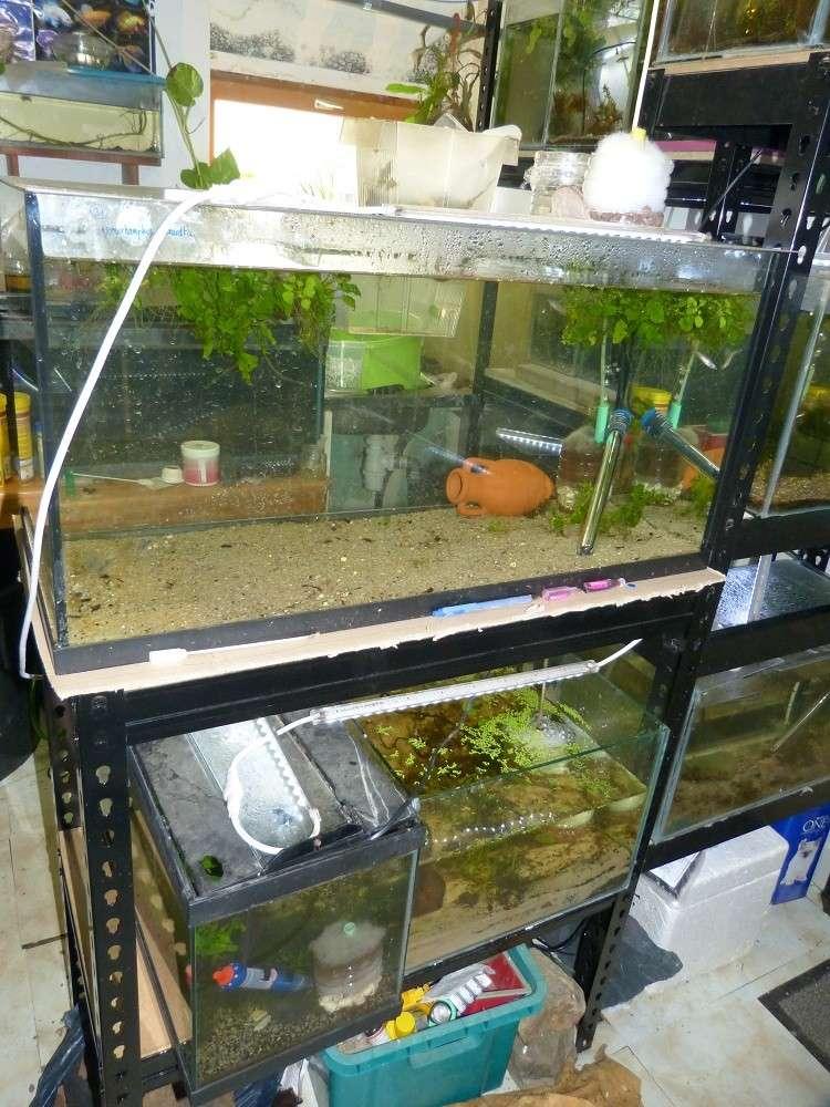 ma fishroom P1030016