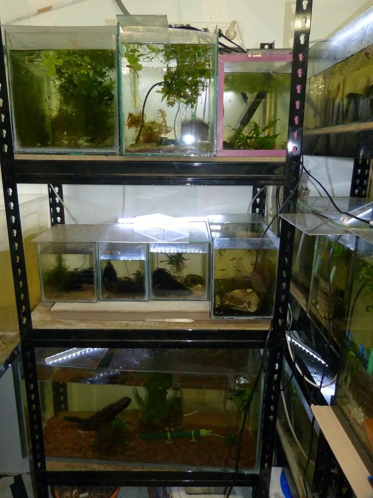 ma fishroom P1030017