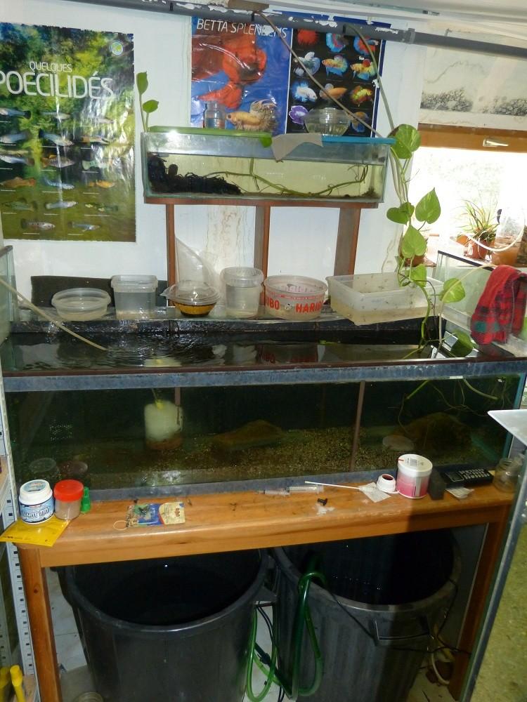 ma fishroom P1030018
