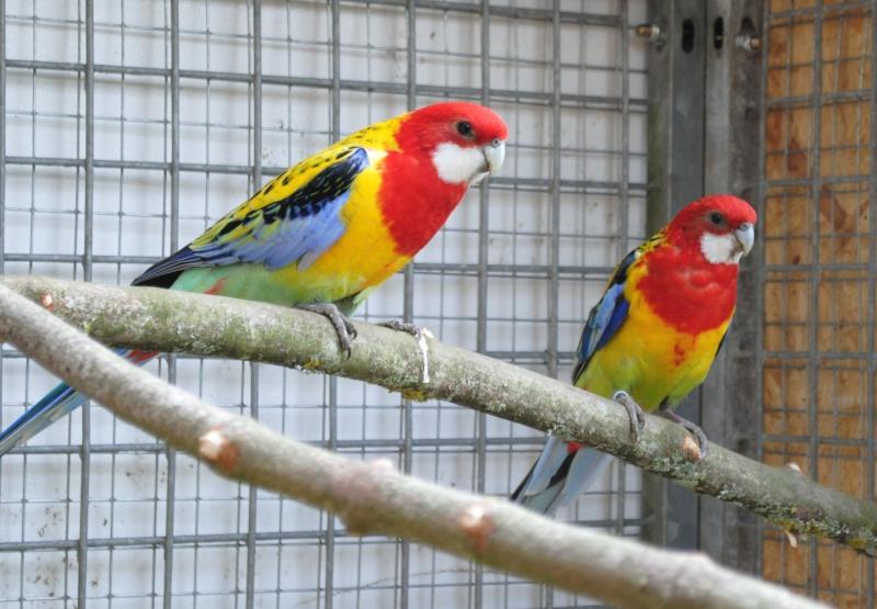 Les installations de vos oiseaux Photo_29