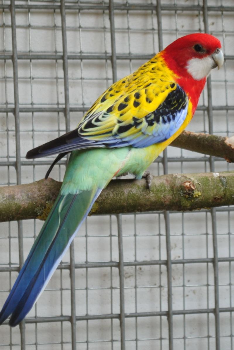 Les installations de vos oiseaux Photo_30