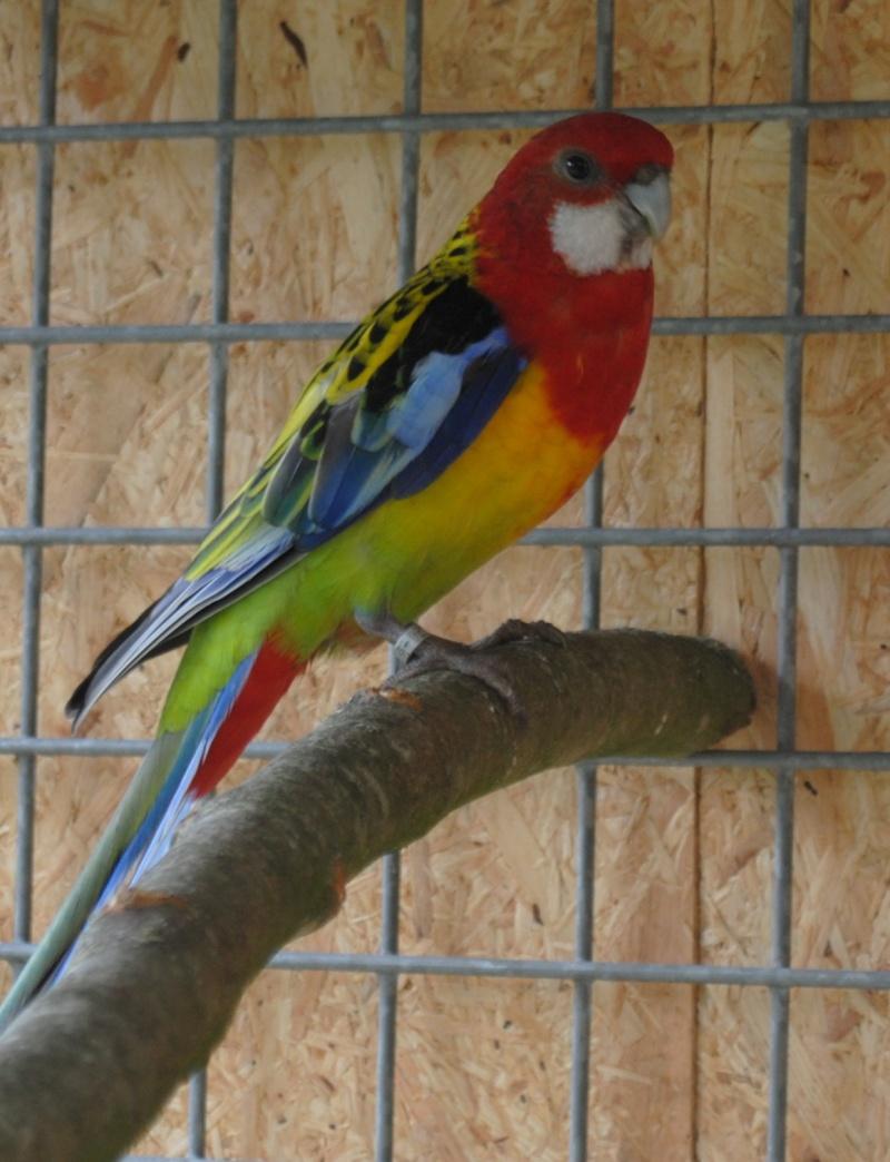 Les installations de vos oiseaux Photo_31