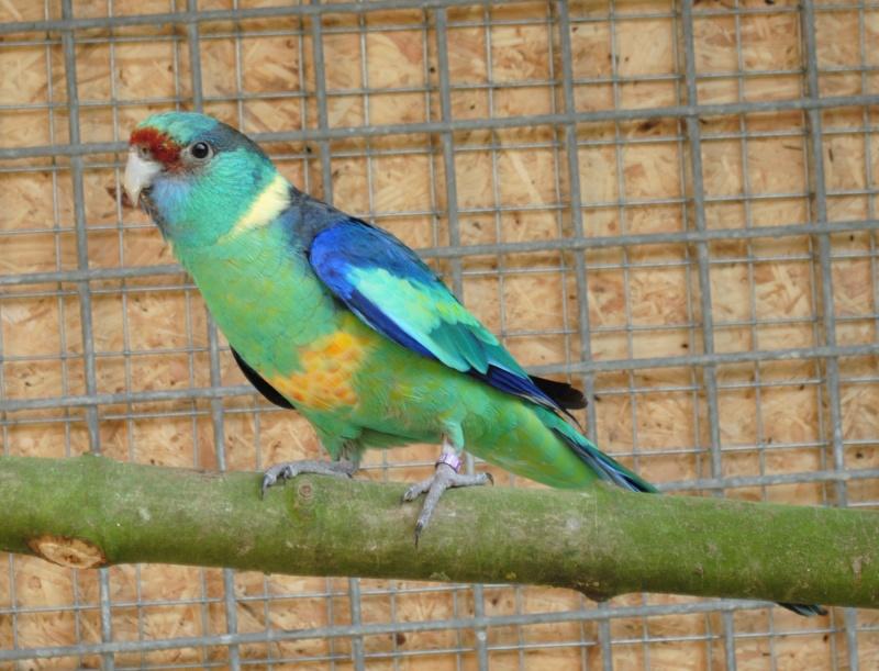 Les installations de vos oiseaux Photo_32