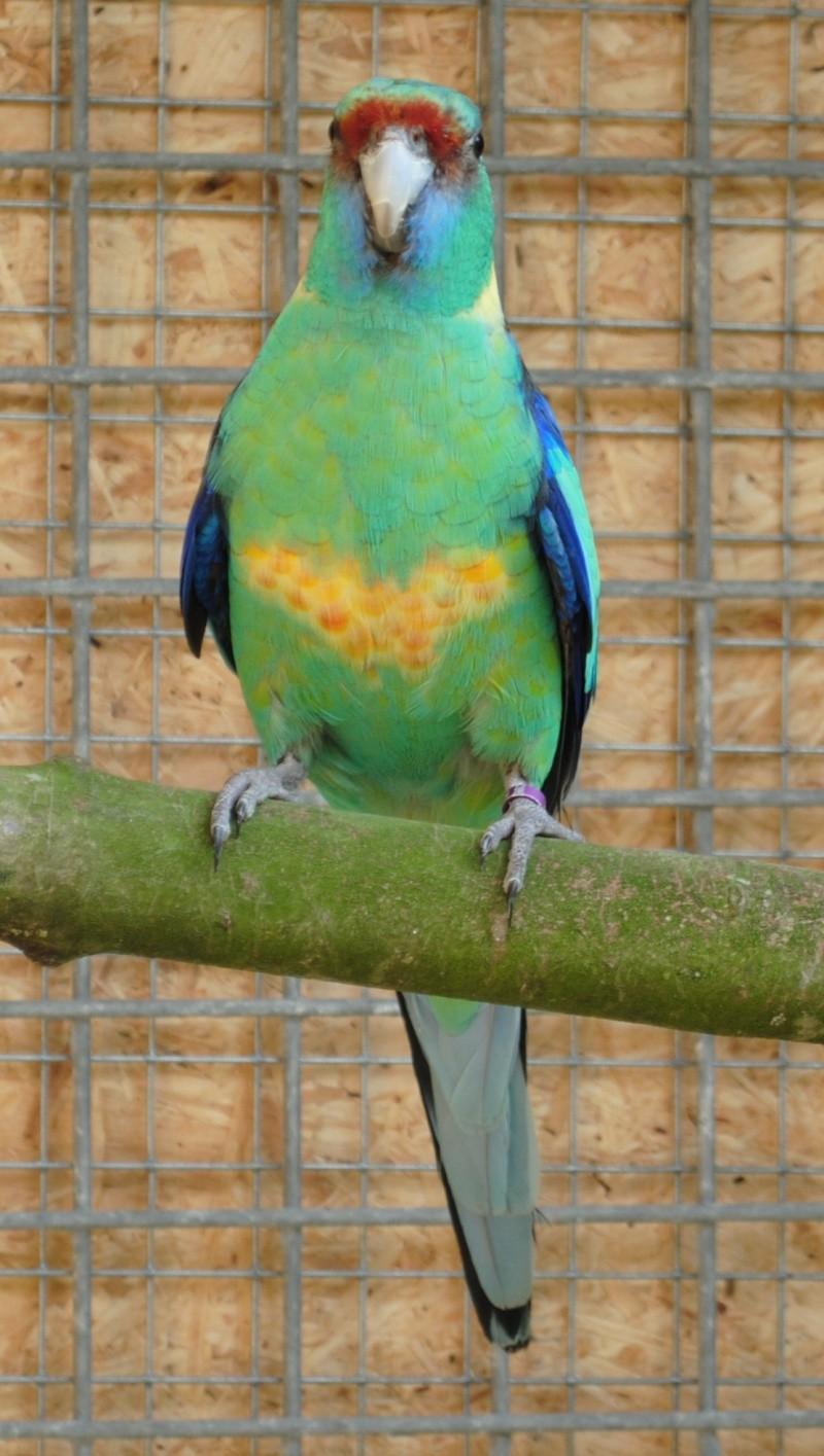 Les installations de vos oiseaux Photo_33