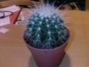 Identification cactus Photos10