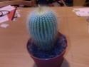 Identification cactus Photos15