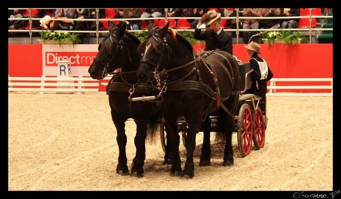 le salon du cheval 2008 - Page 2 Attela10