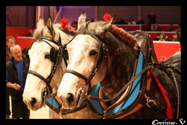 le salon du cheval 2008 - Page 2 Attela12