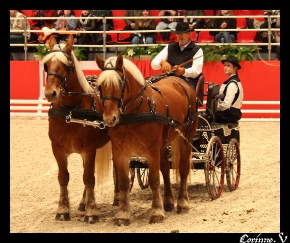 le salon du cheval 2008 - Page 2 Attela13