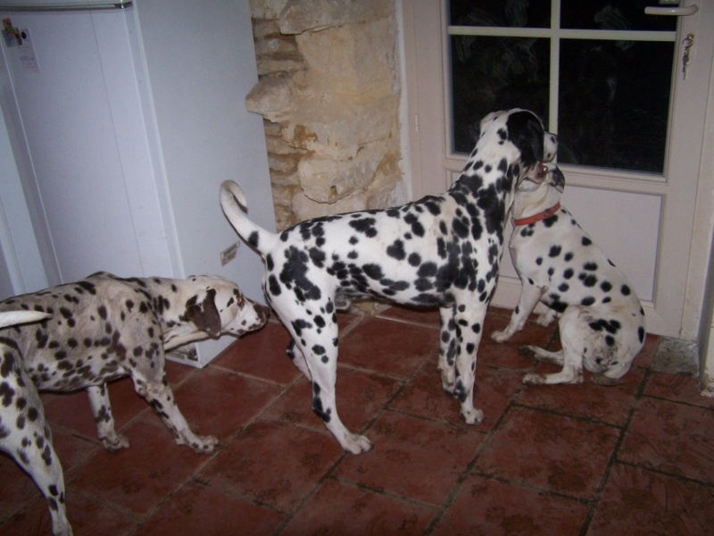 Photo de vos chien noir et beige! - Page 2 100_5710