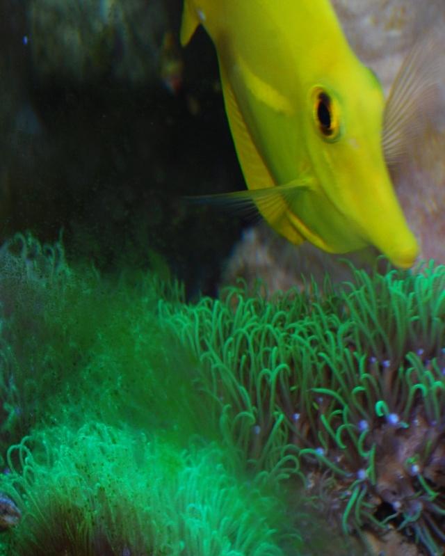 Le bac des Maniacodesrécifs (méthode Reefcorner) Dsc_0410