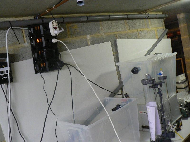 Le bac des Maniacodesrécifs (méthode Reefcorner) P1040911