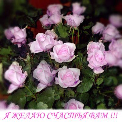 Горячие новости Rose110