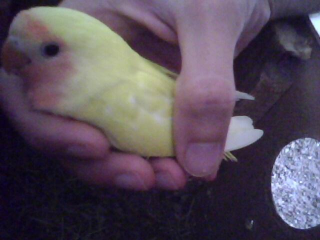 Moje ptice Img00710
