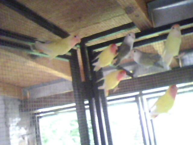Moje ptice Img00811