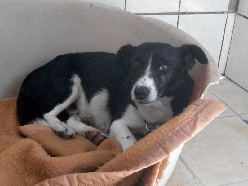 YOOPY (femelle croisée beagle) 04610