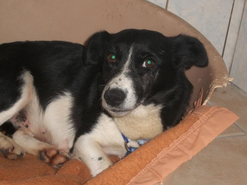YOOPY (femelle croisée beagle) 04810