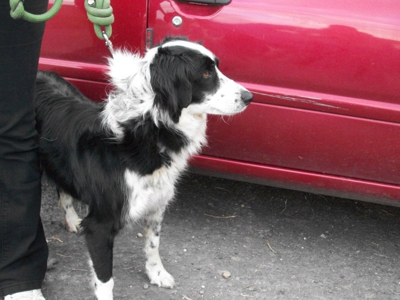 Roasalie (chienne border collie) Cuisni11