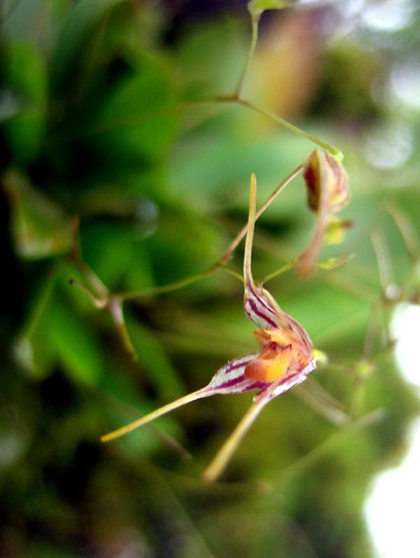 Martinique revisitée : des miniatures toujours Arista11