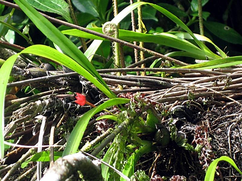 Martinique revisitée : des miniatures toujours Maxico10