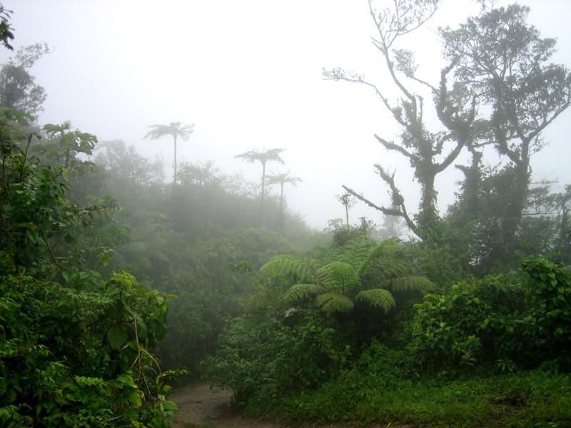 Martinique revisitée : des miniatures toujours Paysag10
