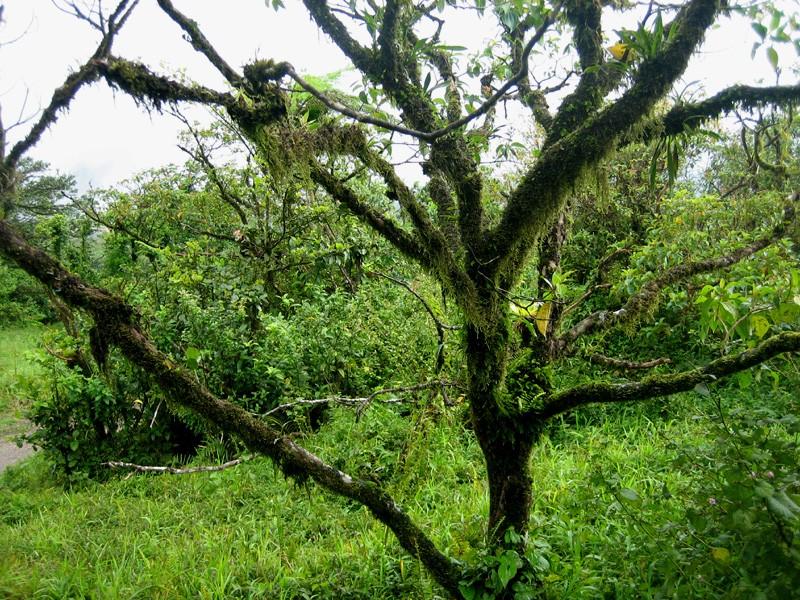 Martinique revisitée : des miniatures toujours Paysc710