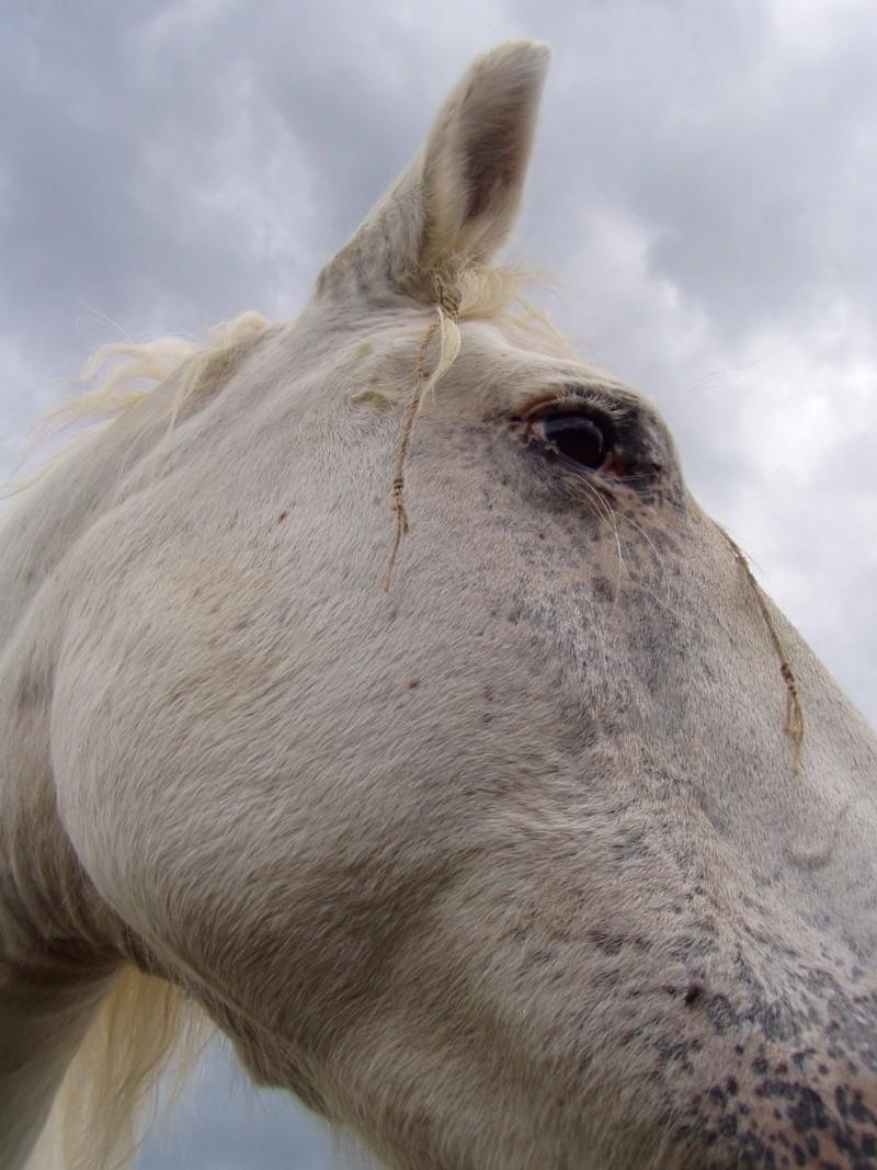"""Concours photo """" oeil de chevaux"""" venez votez ! Vahina11"""