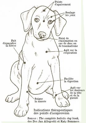 Massage du chien Points10