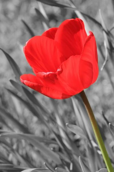 Le printemps le printemps, enfin de la couleur ! Img_8310