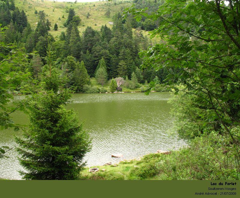 Anabaena  sp.  (Cyanobactérie) Lac_du10